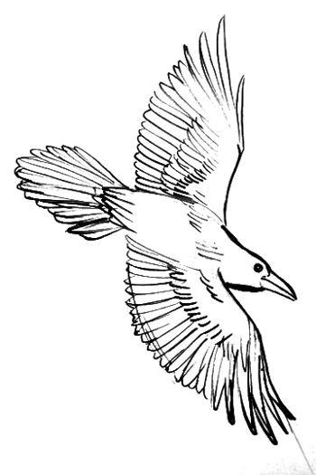 Ворон -рисунок(раскраска)