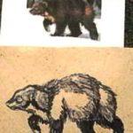 Как нарисовать росомаху и что это за зверь такой
