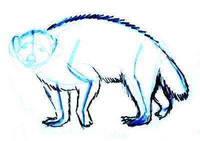 Урок поэтапного рисования росомахи