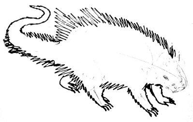 Рисуем цепкохвостого дикобраза