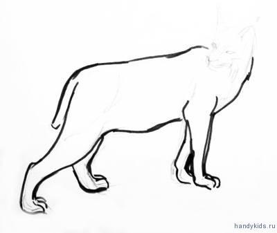 Нарисуем лапы рыси