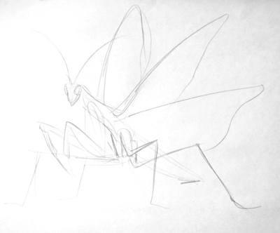 Богомол - рисунок карандашом