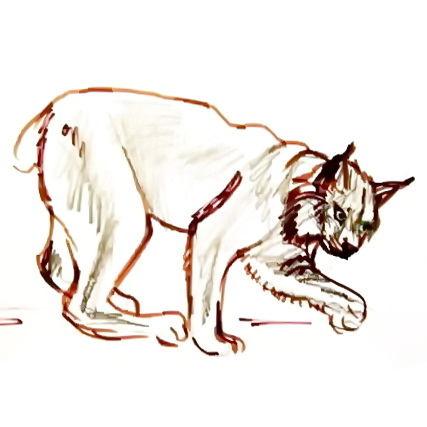 Рисунок рысь -7