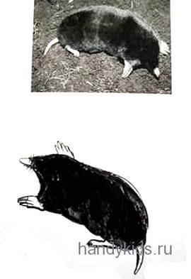 Как нарисовать крота