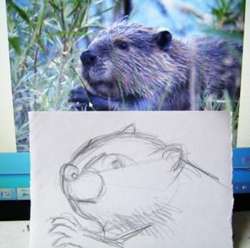 Голова бобра рисунок