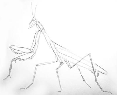 Богомол рисунок карандашом