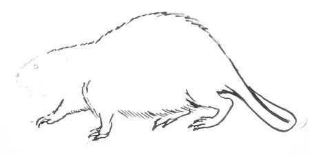 Рисунок бобра