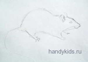 Нарисуем крысу