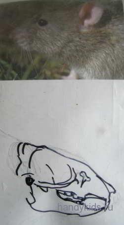 Череп крысы