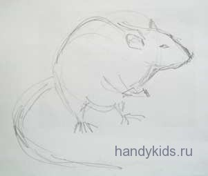 Крыса сидит