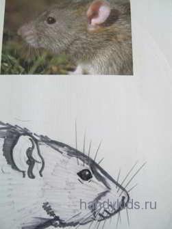 Морда крысы