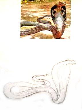 Рисуем кобру