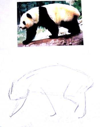 Рисуем панду поэтапно -13