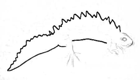 Рисуем тритона поэтапно