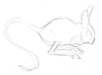 Тушканчик -рисунок карандашом