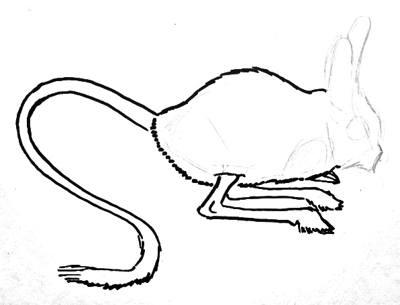 Урок поэтапного рисования тушканчика