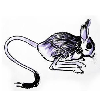 Рисунок Тушканчик