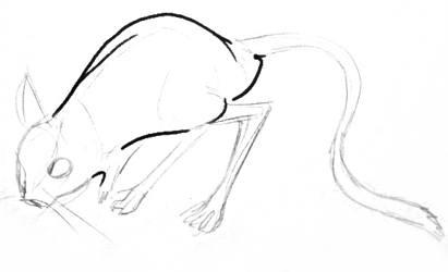 Тушканчик поэтапный рисунок 2