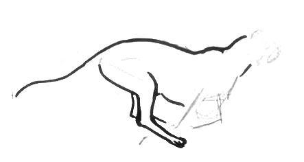 Нарисуем гепарда поэтапно
