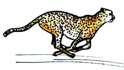 Гепард рисунок 17