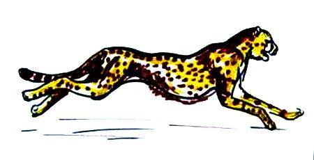 Рисунок гепард -11