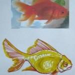 Как нарисовать настоящую золотую рыбку