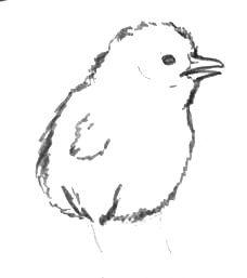 Рисуем цыплёнка поэтапно
