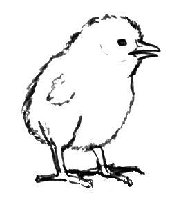 Раскраска Цыплёнок -1
