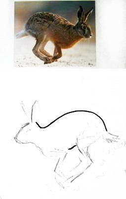 Как нарисовать скачущего зайца