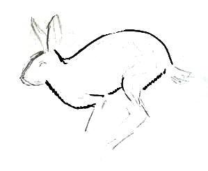 Нарисуем зайца