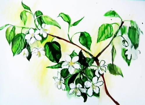 Яблоневый цвет рисунок