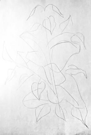 Ветка сирени -рисунок карандашом