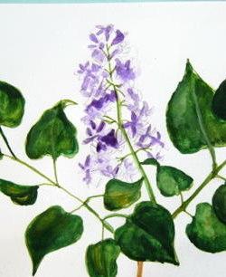 Рисуем цветы сирени