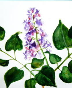 Рисуем цветы сирени 2