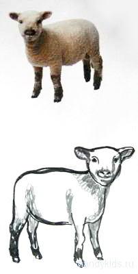 Как нарисовать барашка.