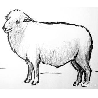 Рисунок баран 3