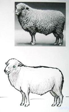 Как нарисовать овна