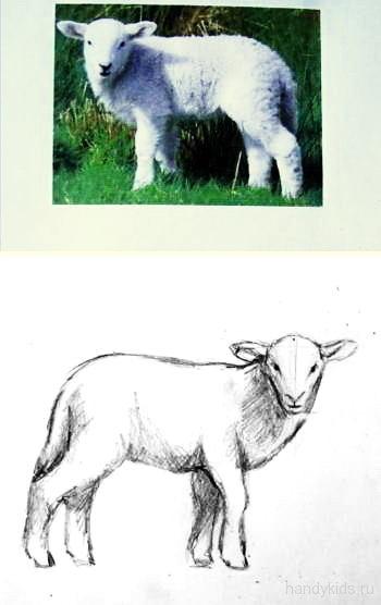 Как нарисовать барашка -3