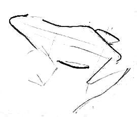 Рисуем поэтапно лягушку
