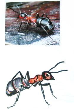 Нарисуем муравья