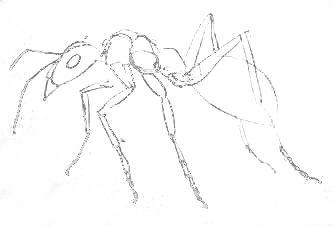 Нарисуем муравья карандашом