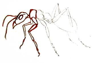 Рисуем муравья поэтапно