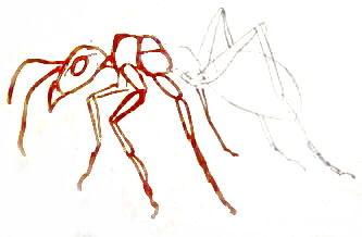 Нарисуем рыжего муравья
