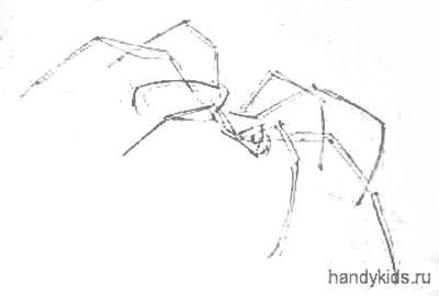 Нарисуем паука сбоку