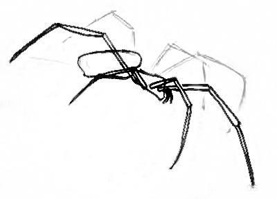 Нарисуем паука поэтапно