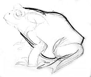 Рисуем жабу