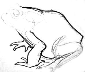 Рисуем жабу поэтапно