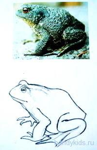 Как нарисовать жабу