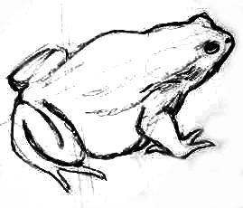 Нарисуем жабу поэтапно
