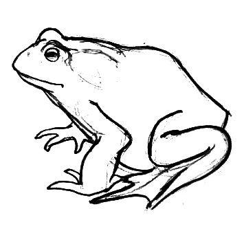 Рисунок Жаба